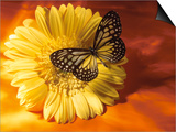 Black and Yellow Butterfly on Yellow Flower Print