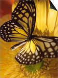 Black and Yellow Butterfly on Yellow Flower Prints