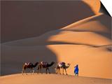 Camels and Dunes, Erg Chebbi, Sahara Desert, Morocco Kunst von Peter Adams