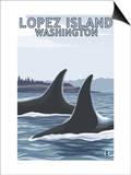 Lopez Island, WA - Orca Fins Posters