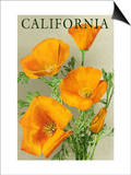 California - Poppies Prints by  Lantern Press