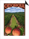 Georgia - Peach Orchard Scene Prints by  Lantern Press