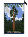 Palo Alto, California - California Redwoods Posters by  Lantern Press