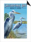 Chesapeake Bay, Maryland - Blue Heron Posters by  Lantern Press