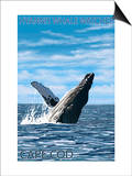 Hyannis Whale Watcher - Cape Cod, MA Prints