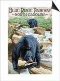 Blue Ridge Parkway, North Carolina - Black Bears Fishing Pósters por  Lantern Press