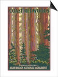 Muir Woods National Monument, California - Forest View Print by  Lantern Press