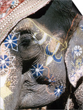 Decorated Elephant, India Posters