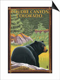Poudre Canyon, Colorado - Bear in Forest Print by  Lantern Press