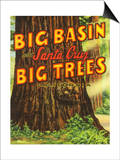 Santa Cruz, California - Big Trees Park, Big Basin Letters Prints by  Lantern Press