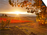 Italy, Umbria, Perugia District, Autumnal Vineyards Near Montefalco Posters by Francesco Iacobelli