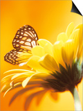 Close-Up Studio Shot of a Delicate Monarch Butterfly Resting on a Yellow Asteraceae Flower Prints