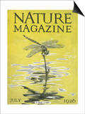 Nature Magazine - View of a Dragonfly over a Pond, c.1926 Print