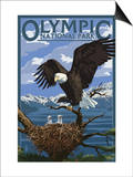 Olympic National Park - Eagle and Chicks Print by  Lantern Press