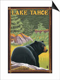 Bear in Forest - Lake Tahoe, California Prints by  Lantern Press