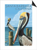 Santa Barbara, California - Pelican Art by  Lantern Press