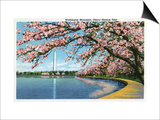 Washington DC, View of the Washington Monument with Blossoming Cherry Trees Prints