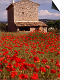 Stone Farmhouse in Field of Poppies, Provence-Alpes-Cote d'Azur, France Posters by Diana Mayfield