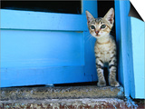 Kitten Standing in Doorway, Apia, Samoa Posters by Will Salter