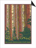 Big Basin Redwoods State Park - Forest View Prints by  Lantern Press