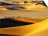Tuareg Nomads with Camels in Sand Dunes of Sahara Desert, Arakou Prints by Johnny Haglund