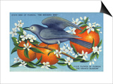 Florida - Mockingbird and Orange Blossoms, State Bird and Flower Prints by  Lantern Press