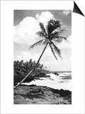 Hawaii - Palms along the Beach Print