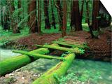 Bridge Covered in Moss over Little Sur River Poster por Douglas Steakley