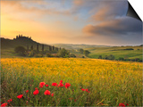Italy, Tuscany, Siena District, Orcia Valley, Podere Belvedere Near San Quirico D'Orcia Print by Francesco Iacobelli