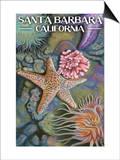 Santa Barbara, California - Tidepools Posters by  Lantern Press