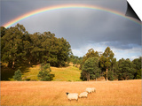 Sheep Grazing under Rainbow Prints by Andrew Bain