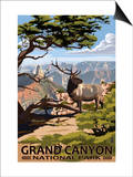 Grand Canyon National Park - Elk & Point Imperial Prints by  Lantern Press