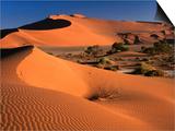 Namib Sand Dunes, Nambia Desert Park, Namib Desert Park, Erongo, Namibia Prints by Carol Polich