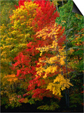 Autumn Colours in Marquette County, USA Prints by Charles Cook