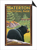 Waterton National Park, Canada - Bear in Forest Prints by  Lantern Press