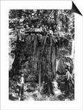Lumberjacks prepairing Fir Tree for St. Louis World's Fair Photograph - Washington State Posters