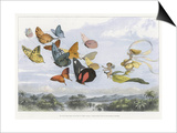 The Fairy Queen Takes an Airy Drive in a Light Carriage Posters by Richard Doyle