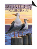 Monterey, California - Sea Gulls Poster by  Lantern Press