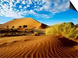 Sand Dunes in Namib Desert Park Poster by Ariadne Van Zandbergen