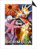 Bermuda - Shells Prints by  Lantern Press