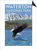 Waterton National Park, Canada - Eagle Fishing Prints