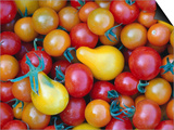 Tomatoes from Ballymaloe Cooking School, Shanagarry, Ireland Print by Oliver Strewe