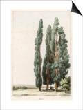 Cypress Prints by  Girard