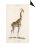 Giraffe Art by Paul Fournier