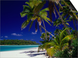 Beach with Palm Trees on Island in Aitutaki Lagoon,Aitutaki,Southern Group, Cook Islands Posters by Dallas Stribley
