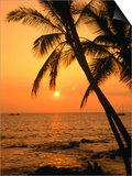 A Couple in Silhouette, Enjoying a Romantic Sunset Beneath the Palm Trees in Kailua-Kona, Hawaii Posters by Ann Cecil