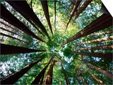 Redwood Grove Prints by Douglas Steakley