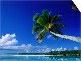 Palm Tree Over Aitutaki Beach and Lagoon, Aitutaki, Southern Group, Cook Islands Poster by John Banagan
