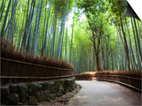 Bamboo Forest Walkway, Arashiyama District Art by Rachel Lewis