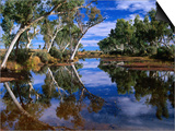 Creek Lined with River Red Gum Near Hermannsaburg, Northern Territory, Australia Prints by Ross Barnett